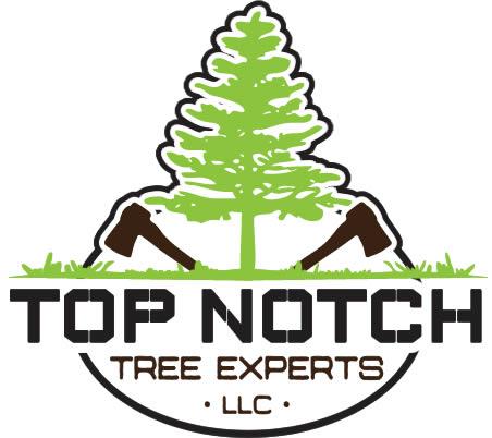 TNTE_logo